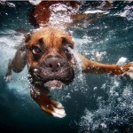 Dog Fetches Ball Underwater